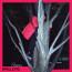 """""""Spalle più"""" è il nuovo singolo di RAREŞ che anticipa l'uscita dell'album di esordio a marzo"""